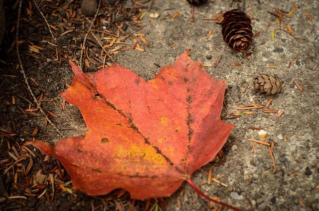 leaf-681671_640
